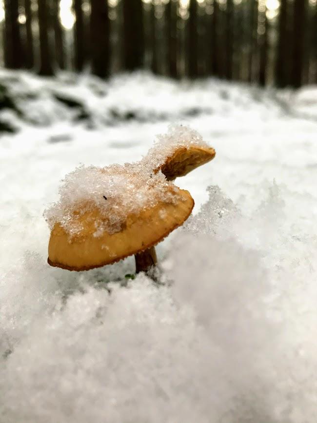 """Agaricus – """"Boží houba"""""""